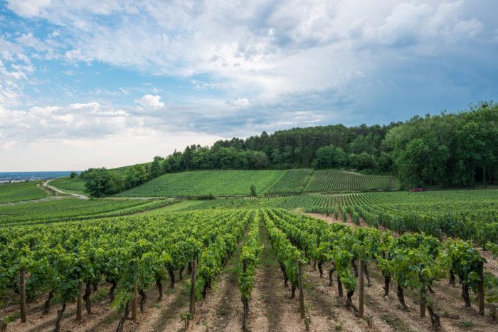 Domaine Deveney-Mars Dans nos vignes