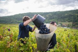 domaine deveney•mars uncategorized vins beaune nuit cotes